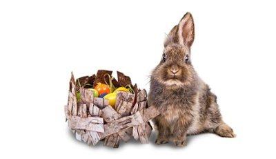 Ein Hase neben einem Nest mit gefärbten Eiern
