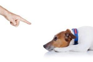 Finger der auf einen am Boden liegenden Hund zeigt