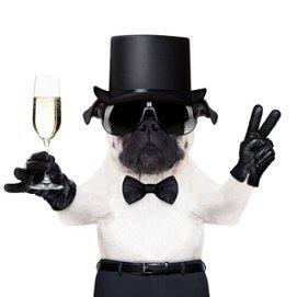 Hund mit Zylinder Hemd Krawatte Sonnenbrille und Sektglas